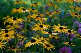 Aspen yard flowers